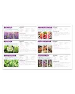"""""""Essential Oils and The Brain"""" Foldout (25 Count)"""